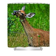 The Dreaded Deer Giraffe Shower Curtain