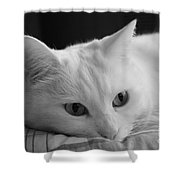 The Dreamer Cat Shower Curtain