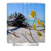 The Driftwood Beach Tree Shower Curtain