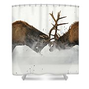 The Duel Of Fighting Elk Shower Curtain
