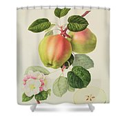 The Dutch Codlin Shower Curtain by William Hooker