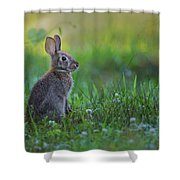The Eastern Cottontail Shower Curtain