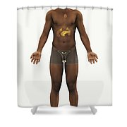 The Endocrine System Shower Curtain
