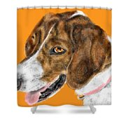 The English Pointer Foxhound Shower Curtain