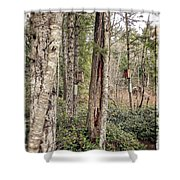 Birdhouse Neighbourhood Hamilton Marsh  Shower Curtain