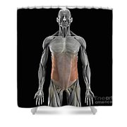 The External Oblique Muscles Shower Curtain