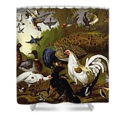 The Fable Of The Raven With A Peacock, Cockerel, Woodpecker, Jay, Woodcock, And Magpie Shower Curtain