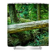 The Fallen Collection 12 Shower Curtain