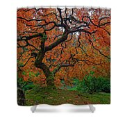 The Famous Tree At Portland Japanese Garden Shower Curtain