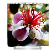 the Feijoa Blossom Shower Curtain