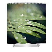 The Fern Shower Curtain