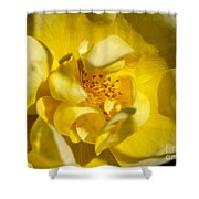 The Finer Things Shower Curtain by Valeria Donaldson