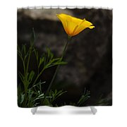 The First Poppy  Shower Curtain