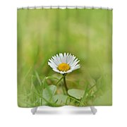 The First White Daisy Shower Curtain