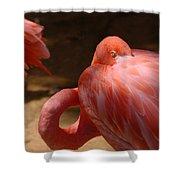 The Flamingo Wakens Shower Curtain