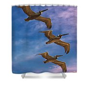 The Flight Of The Pelican Shower Curtain