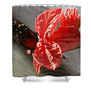 The Flower And The Butterfly Shower Curtain