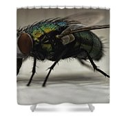 The Fly Macro Shower Curtain