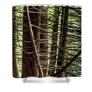 The Forest Combed By The Wind In The Lake Shower Curtain