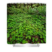 The Forest Floor Shower Curtain