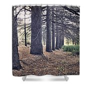 The Forest Of A Thousand Stories Shower Curtain
