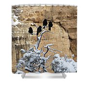 The Four Crows Shower Curtain