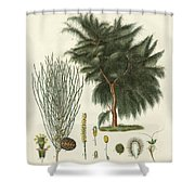 The Four-flapped Casuarina Shower Curtain