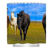 The Four Musketeers Shower Curtain