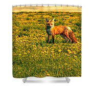 The Fox And The Cow Shower Curtain