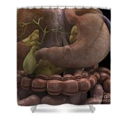 The Gallbladder And Stomach Shower Curtain