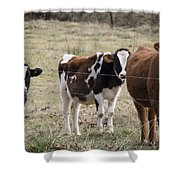 The Gallery Shower Curtain