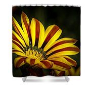 The Gazania Shower Curtain
