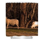 The Gazing And Grazing Sheep Shower Curtain