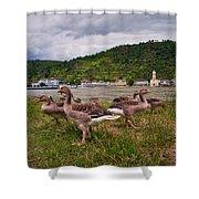 The Geese Of St Goar Am Rhein Shower Curtain