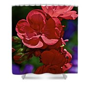 The Geraniums Shower Curtain