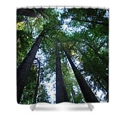 The Giant Redwoods I Shower Curtain