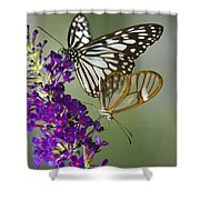 The Glasswing And A Friend  Shower Curtain