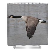 The Glide Shower Curtain
