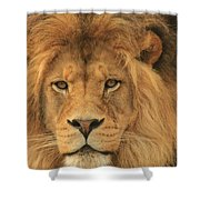 The Glory Of A King Shower Curtain