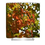 The Glory Of Autumn Shower Curtain