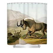The Gnoo, 1804 Shower Curtain