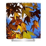 The Golden Hues Of Autumn  Shower Curtain