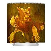 The Golden Iris Shower Curtain
