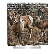 The Good Shepherd's Sheep Shower Curtain
