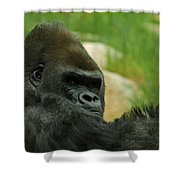 The Gorilla 2 Shower Curtain