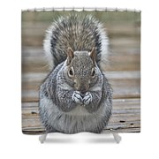 The Gray Squirrel Shower Curtain