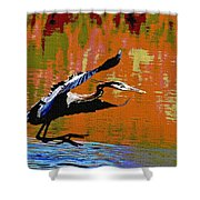 The Great Blue Heron Jumps To Flight Shower Curtain