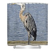 The Great Blue Heron Photo Shower Curtain