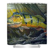 The Great Peacock Bass Shower Curtain by Terry  Fox