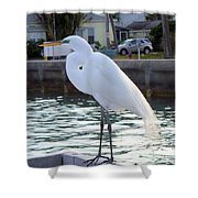 The Great White Egret Shower Curtain